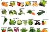 Dimmi che mese è e ti dirò che frutta e verdura comprare: ogni stagione ha la sua, questa è la lista degli alimenti di ottobre e delle loro proprietà